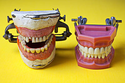 Laugh Photograph - Dental Models by Garry Gay