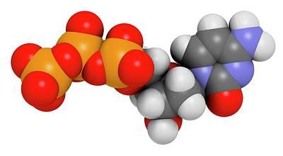 Deoxyribonucleic Acid Photograph - Deoxycytidine Triphosphate Molecule by Molekuul