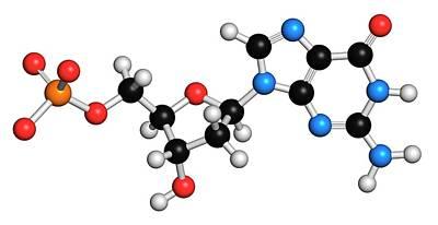 Deoxyribonucleic Acid Photograph - Deoxyguanosine Monophosphate Molecule by Molekuul