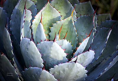 Landscaped Grounds Photograph - Desert Artichoke Agave by Julie Palencia