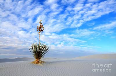 Desert Beauty White Sands New Mexico Print by Bob Christopher