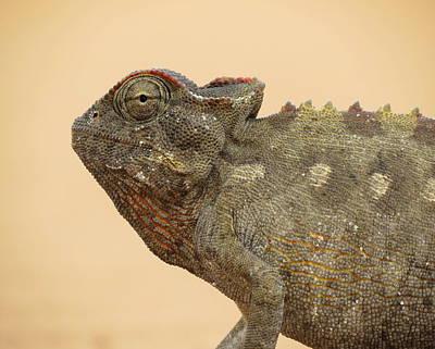Desert Chameleon Print by Ramona Johnston