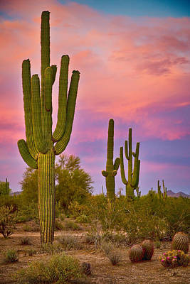 Arizona Photograph - Desert Spring by James BO  Insogna