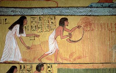 Field Of Crops Photograph - Detail Of A Harvest Scene On The East Wall, From The Tomb Of Sennedjem, The Workers Village, New by Egyptian 19th Dynasty