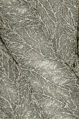 Fraktal Digital Art - Detailed Leaf Texture by Hakon Soreide