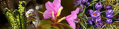 Early Spring Photograph - Details Of Early Spring Flowers by Panoramic Images