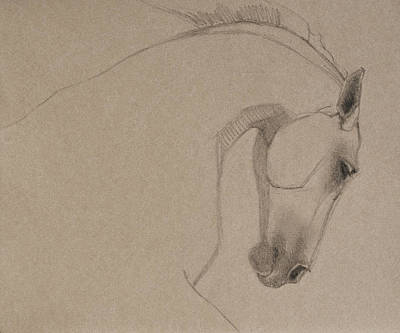 Horses Drawing - Determination - Grey Version by Jani Freimann