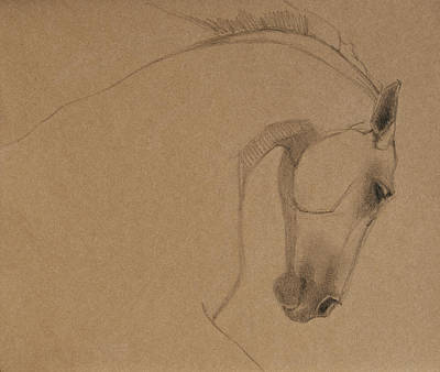 Horses Drawing - Determination by Jani Freimann