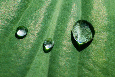 Turf Photograph - Diamonds Are Forever - Featured 3 by Alexander Senin