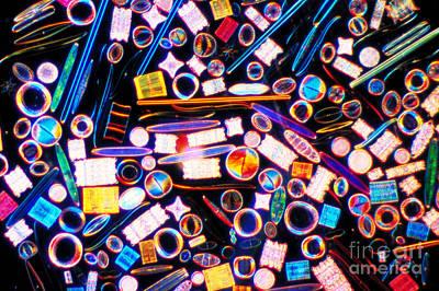 Diatom Photograph - Diatom Arrangement by Kent Wood