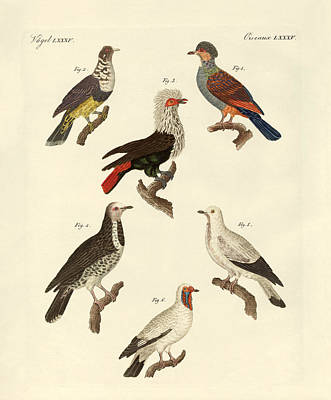 Pigeon Drawing - Different Kinds Of Foreign Pigeons by Splendid Art Prints
