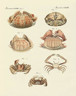 Different Kinds Of Shrimps And Crabs Print by Splendid Art Prints