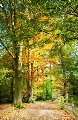 Pathway Digital Art - Digital Art Woodland Pathway In Autumn by Natalie Kinnear