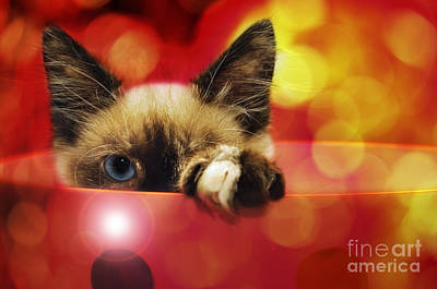 Andee Fine Art And Digital Design Photograph - Disco Kitty 1 by Andee Design