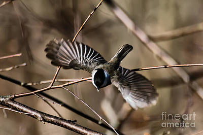 Chickadee Digital Art - Dive Bomber by Lois Bryan