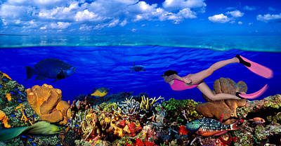 Diver Along Reef With Parrotfish, Green Print by Panoramic Images
