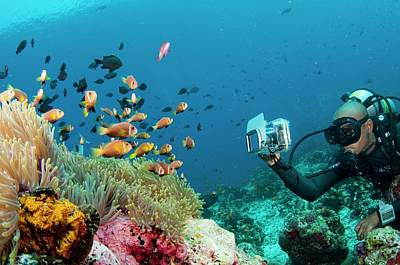 Diver Photographing Anemonefish Print by Scubazoo