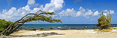 Aruba Photograph - Divi Divi Tree Caesalpinia Coriaria by Panoramic Images