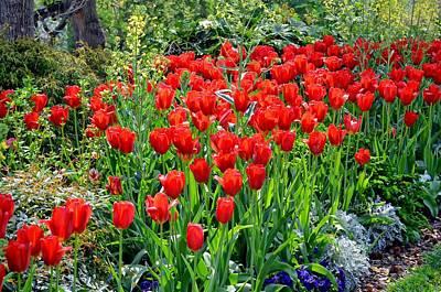 Photograph - Divine Garden...... by Tanya Tanski