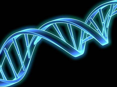 Dna (deoxyribonucleic Acid) Strand Print by Laguna Design