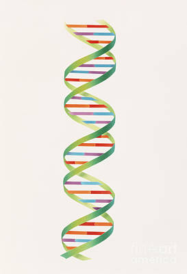 Dna Double Helix Print by Carlyn Iverson