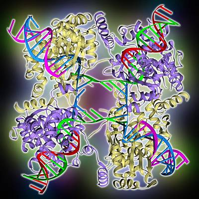 Dna Holliday Junction Complex Print by Science Photo Library
