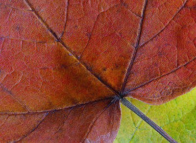 Birch Bark Photograph - Do Not Leaf Me Now by Juergen Roth
