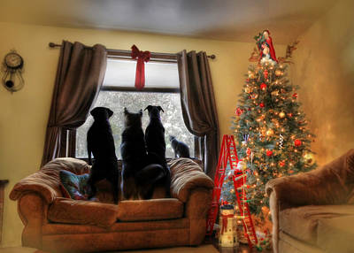 Retrievers Photograph - Do You Hear What I Hear by Lori Deiter