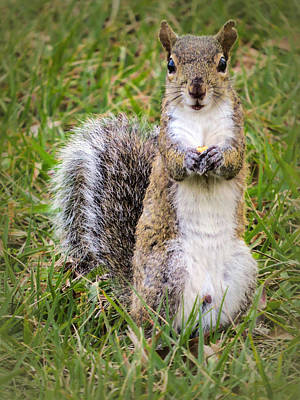 Squirrel Photograph - Do You Want Some? by Zina Stromberg