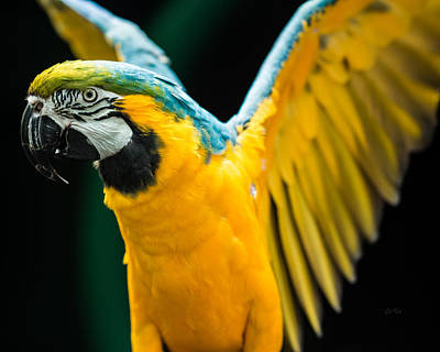 Parakeet Digital Art - Do Your Exercise Daily Blue And Yellow Macaw by Eti Reid