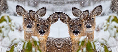 Flurries Photograph - Doe You See Me by Betsy Knapp