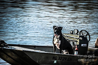 Dog In Landscape Photograph - Dog Gone Fishing by Peggy  Franz