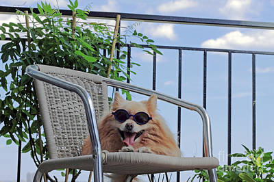 Lazy Dog Photograph - Dog In Summer by Charline Xia