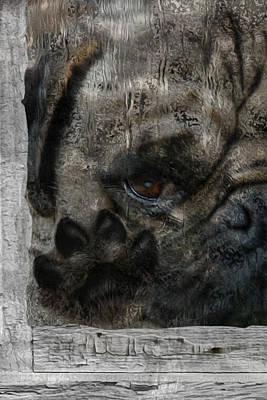 Dog In The Window Print by Jack Zulli