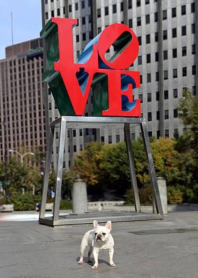 Dog Photograph - Dog Love by Lisa Phillips