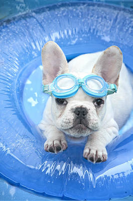 Goggles Painting - Dog Paddle by Lisa Jane