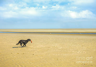 Dog Running On A Beach Print by Diane Diederich