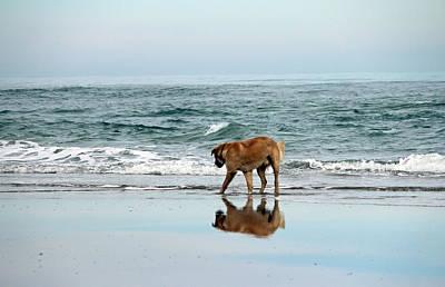 Companion Digital Art - Dog Walking by Cynthia Guinn