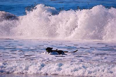 Dogs At Carmel California Beach Print by Barbara Snyder