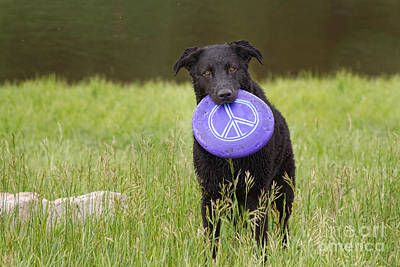 James Insogna Photograph - Dogs For Peace Too by James BO  Insogna