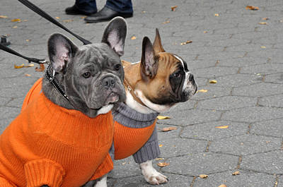 Dogs In Sweaters Print by Diane Lent