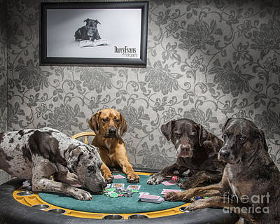 Catahoula Photograph - Dogs Playing Poker by Darcy Evans