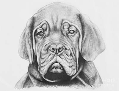 Dogue De Bordeaux Dog Print by Lena Auxier