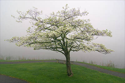 Dogwood Lake Photograph - Dogwood And Fog With Bench - Abbott Lake - Peaks Of Otter by Byron Spencer