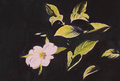 Dogwood Blossom Print by Donna Oshea