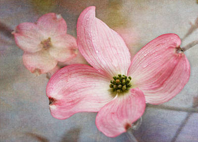 Dogwood Blossoms Print by Angie Vogel