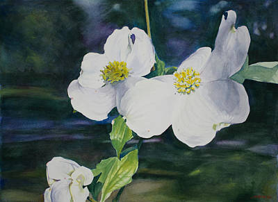 Watercolor Painting - Dogwood Blossoms by Christopher Reid