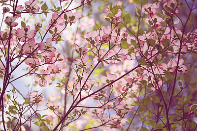 Floriade Photograph - Dogwood Cover by Debbie Hartley