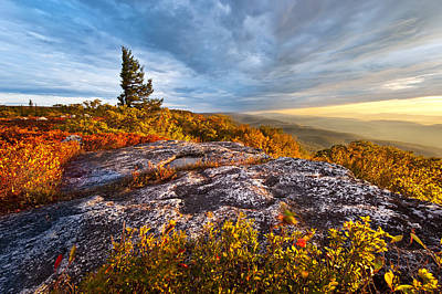 Dolly Sods Wilderness Print by Bernard Chen