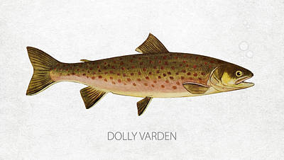 Salmon Digital Art - Dolly Varden by Aged Pixel